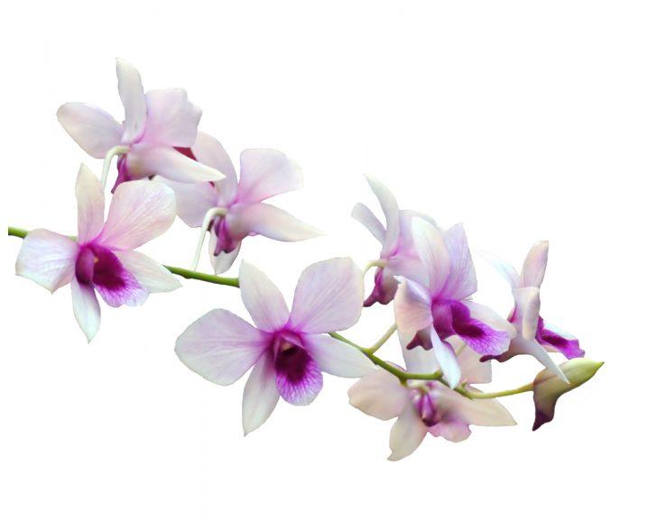 imagesorchidee-13.jpg